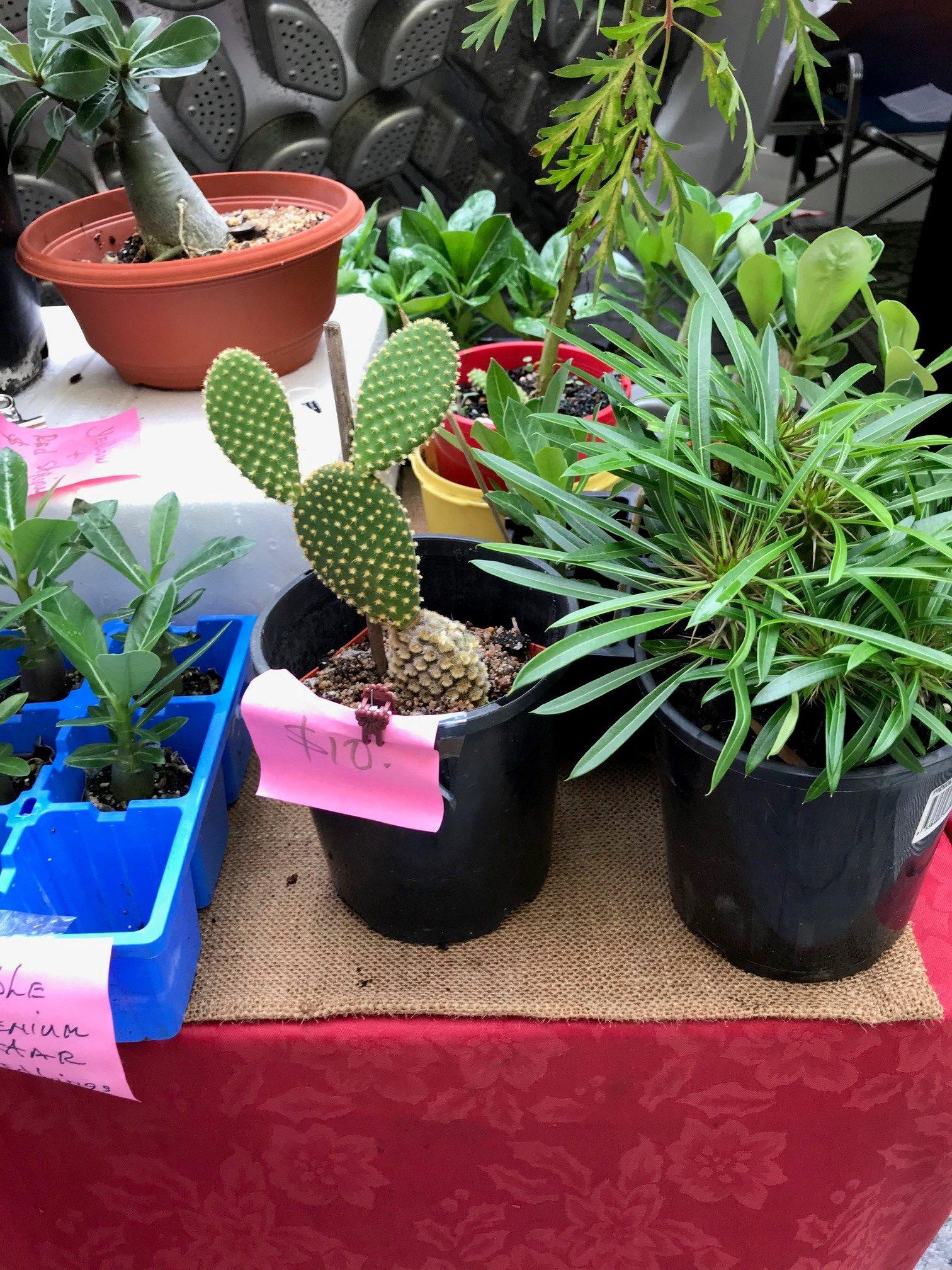 Brisbane's pest plant black market